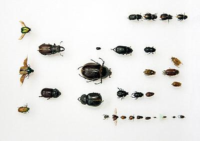 Bugs - p3270213 by René Reichelt