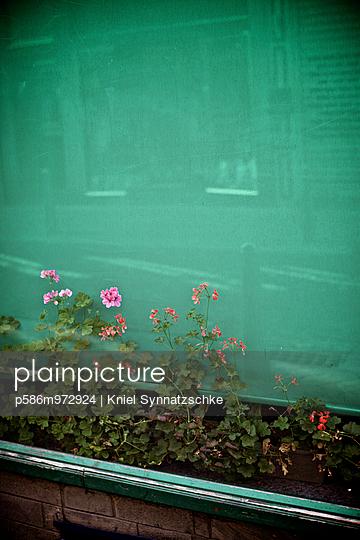 Pflanzen wachsen in einem Schaufenster - p586m972924 von Kniel Synnatzschke