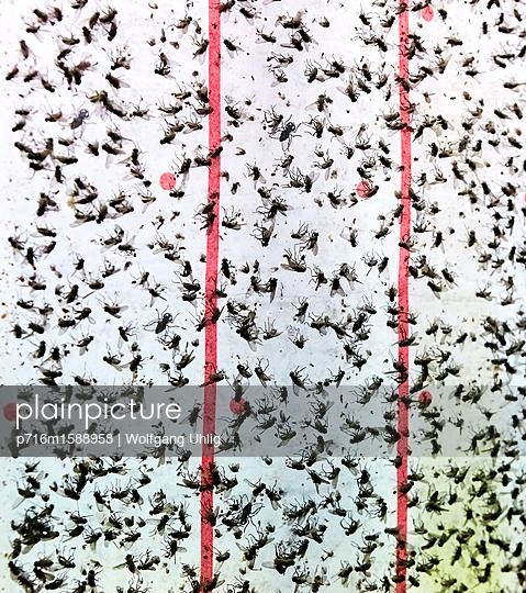 Tote Fliegen - p716m1588958 von Wolfgang Uhlig