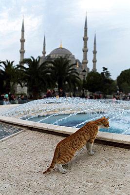 Katze vor der Blauen Moschee - p1063m912471 von Ekaterina Vasilyeva