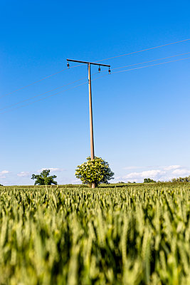 Field and power line - p300m1469862 by Ega Birk