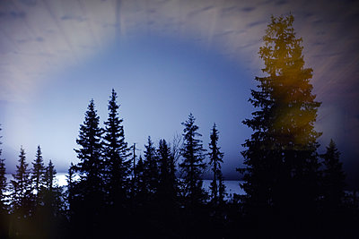 Silhouettes of trees at dusk - p312m1187845 by Dan Lepp