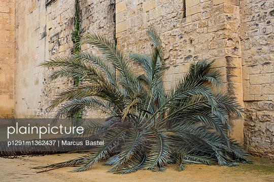 Fallen palm tree - p1291m1362437 by Marcus Bastel