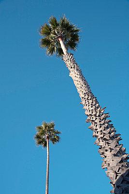 Twentynine Palms USA - p3300364 von Harald Braun