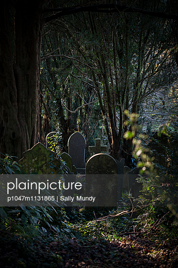 Old gravestones between trees - p1047m1131865 by Sally Mundy