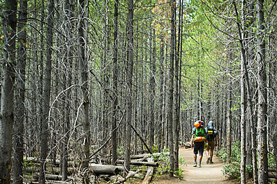 Two friends hiking through the forest. - p343m1184700 by Rob Hammer