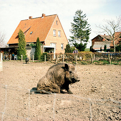 Unusual domestic animal - p4360061 by R. Petersen
