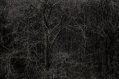 Kahle Bäume am Flussufer - p910m1195588 von Philippe Lesprit