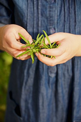 Girl holding rosemary, close-up - p1026m906827f by AlexandraDost