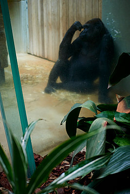 Affe im Zoo - p1164m1058000 von Uwe Schinkel