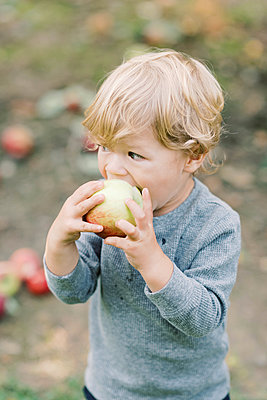 Little boy eating an apple in the middle of an apple orchard. - p1166m2151895 by Cavan Images