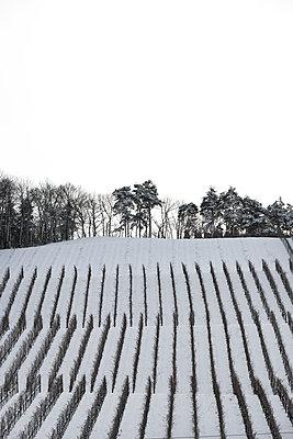 Weinberge im Winter - p248m1004121 von BY