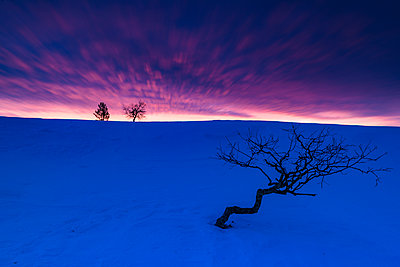 Winter landscape at dawn - p312m1470569 by Mikael Svensson