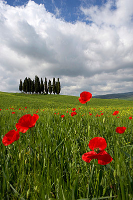 Orcia valley in spring - p4298150 by Fabio Muzzi