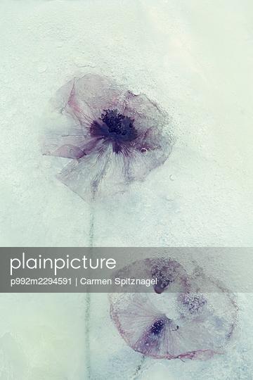 p992m2294591 by Carmen Spitznagel
