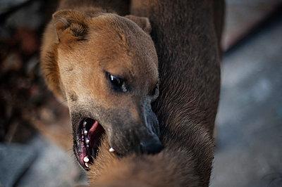 Stray dogs - p1007m959882 by Tilby Vattard