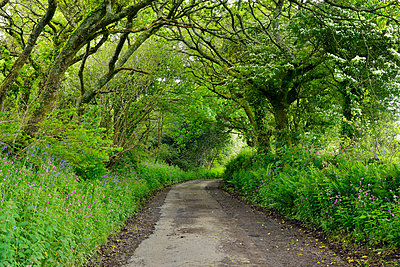 United Kingdom, England, Cornwall, Narrow country road treelined in forest - p300m2042980 by Martin Rügner