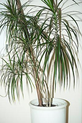 Houseplant - p1149m1042252 by Yvonne Röder