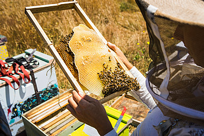 High angle view of beekeeper examining honeycomb frame during sunny day - p1166m1508432 by Cavan Images