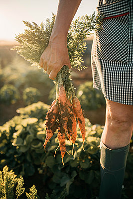 Female farmer holding carrots at vegetable garden - p300m2293510 by LUPE RODRIGUEZ