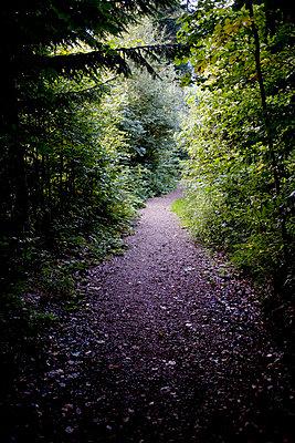 Waldweg - p4470309 von Anja Lubitz