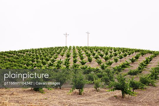 p1166m1164342 von Cavan Images