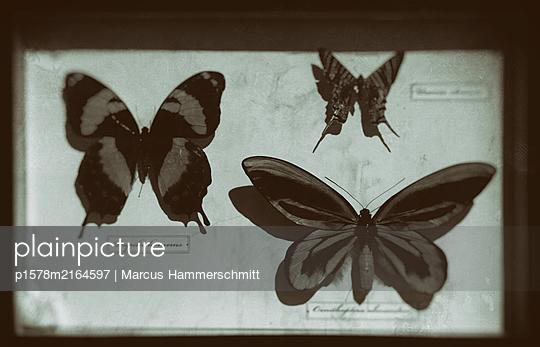 p1578m2164597 by Marcus Hammerschmitt