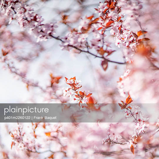 Spring blossoms - p401m2260122 by Frank Baquet