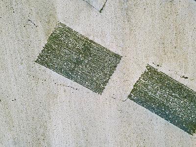 Seaweed - p1108m2090359 by trubavin