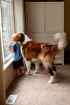 Toddler boy looking out the window with his large St. Bernard dog - p1166m2148792 by Cavan Images