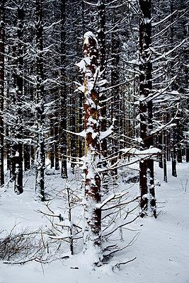 Baumstämme im Schnee - p362m1541398 von André Wagner