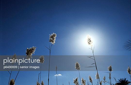 Schilf am Mandara-See vor dem Himmel  - p6430009 von senior images