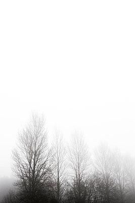 Fog - p1057m1005053 by Stephen Shepherd