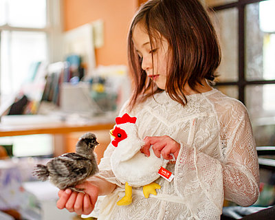 A little girl introduces her baby chick to a toy chicken - p1166m2205708 by Cavan Images