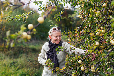 Woman picking apples - p312m2101710 by Pernille Tofte