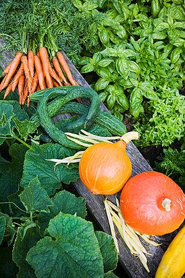 Varied vegetables in a row - p5755885 by Lina Karna Kippel