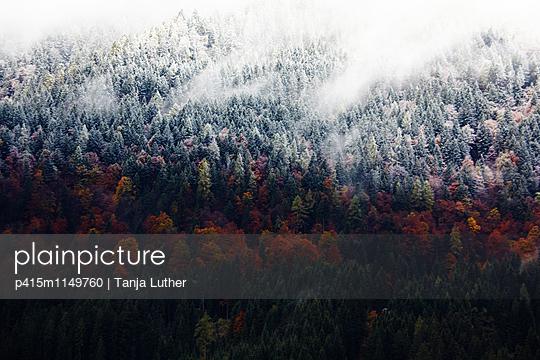 Herbstwald - p415m1149760 von Tanja Luther