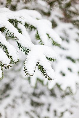Neuer Schnee - p756m787457 von Bénédicte Lassalle