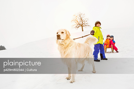 Boy with dog pulling two friends on toboggan in snow - p429m802344 by Cultura