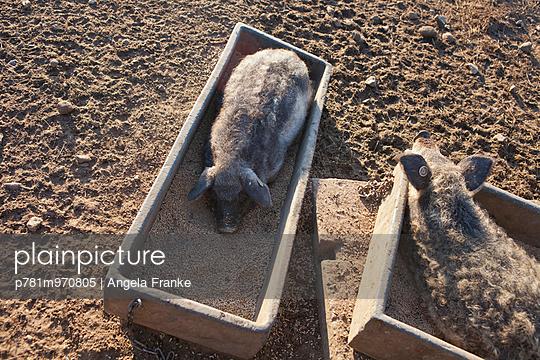 Im Futtertrog - p781m970805 von Angela Franke