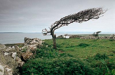 Skurriler Baum - p3300004 von Harald Braun