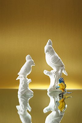 Porcelain cockatoos - p237m1461364 by Thordis Rüggeberg