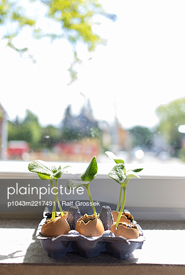 Pflanzen - p1043m2217491 von Ralf Grossek