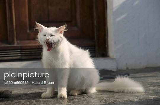 Gähnende Katze - p330m660892 von Harald Braun