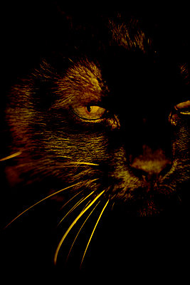 Black cat - p1028m2164173 by Jean Marmeisse