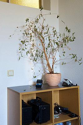 Büropflanze bei der Mordkommision II - p1164m951944 von Uwe Schinkel