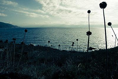 Corsica - p829m972348 by Régis Domergue