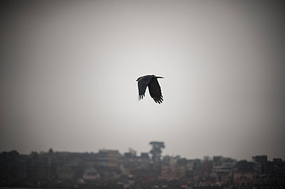 Crow - p1007m1059897 by Tilby Vattard