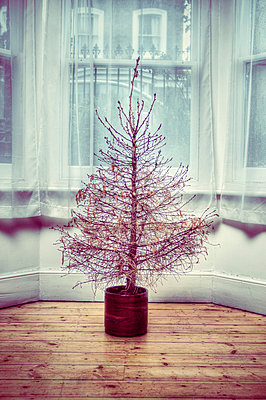 Dead Christmas tree in front room - p1072m829330 by Neville Mountford-Hoare
