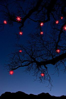 Kahler Baum mit leuchtenden Lampions - p533m1474784 von Böhm Monika